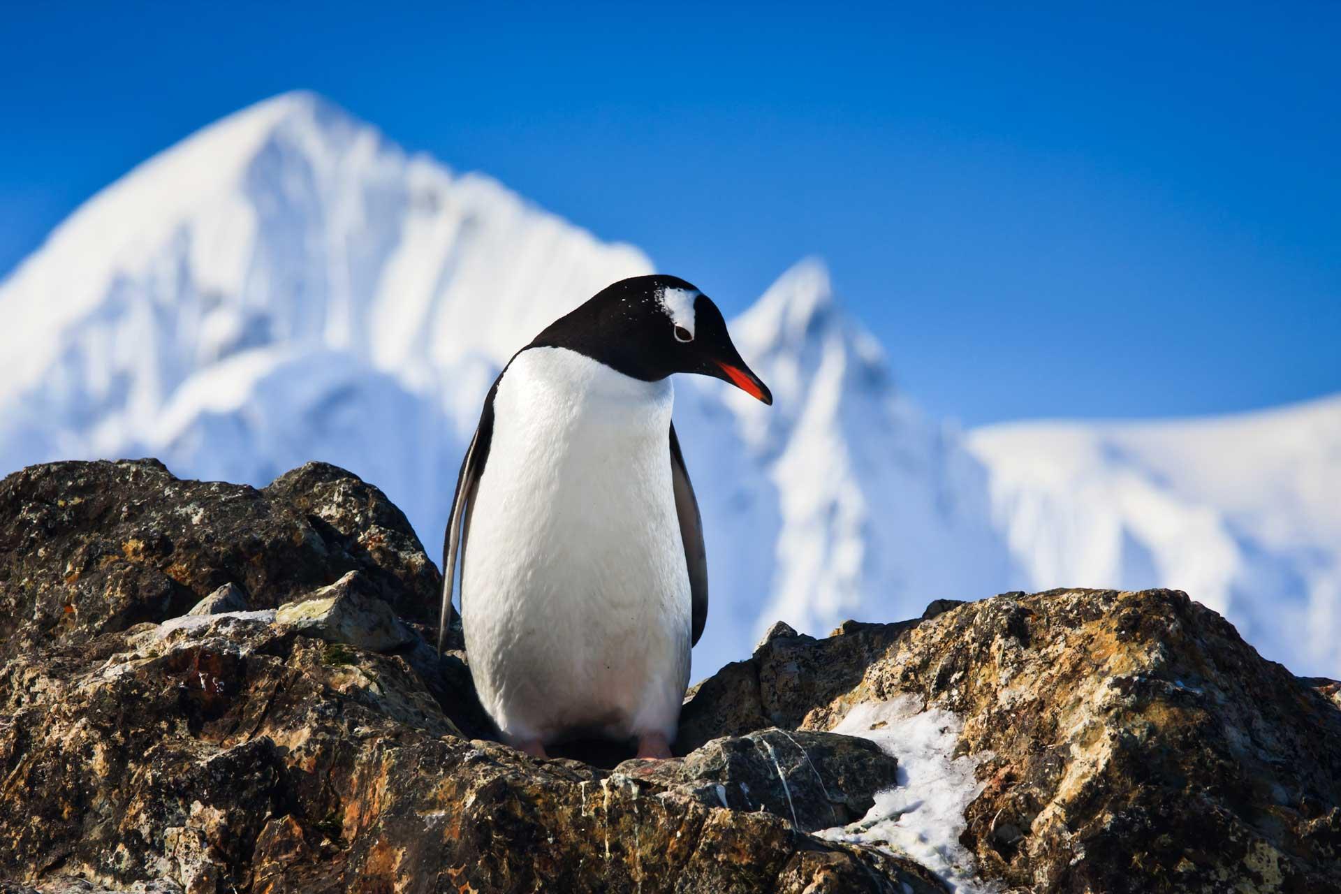 penguin-on-the-rocks-P9BZE6G.jpg